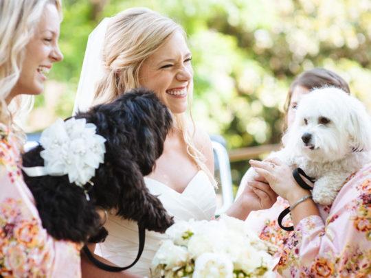 bride-&-dogs